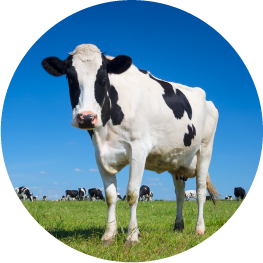 Organic Dairy Foods